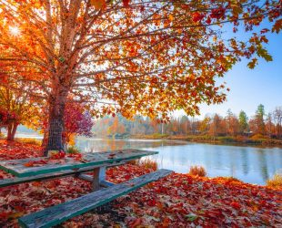 Ease your way into autumn